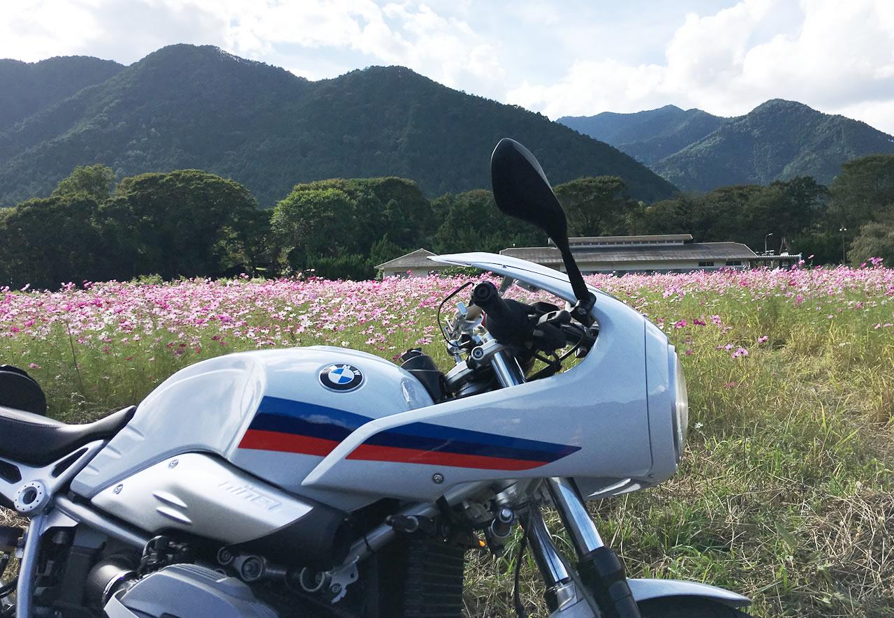 バイクが喜んでいるようだ