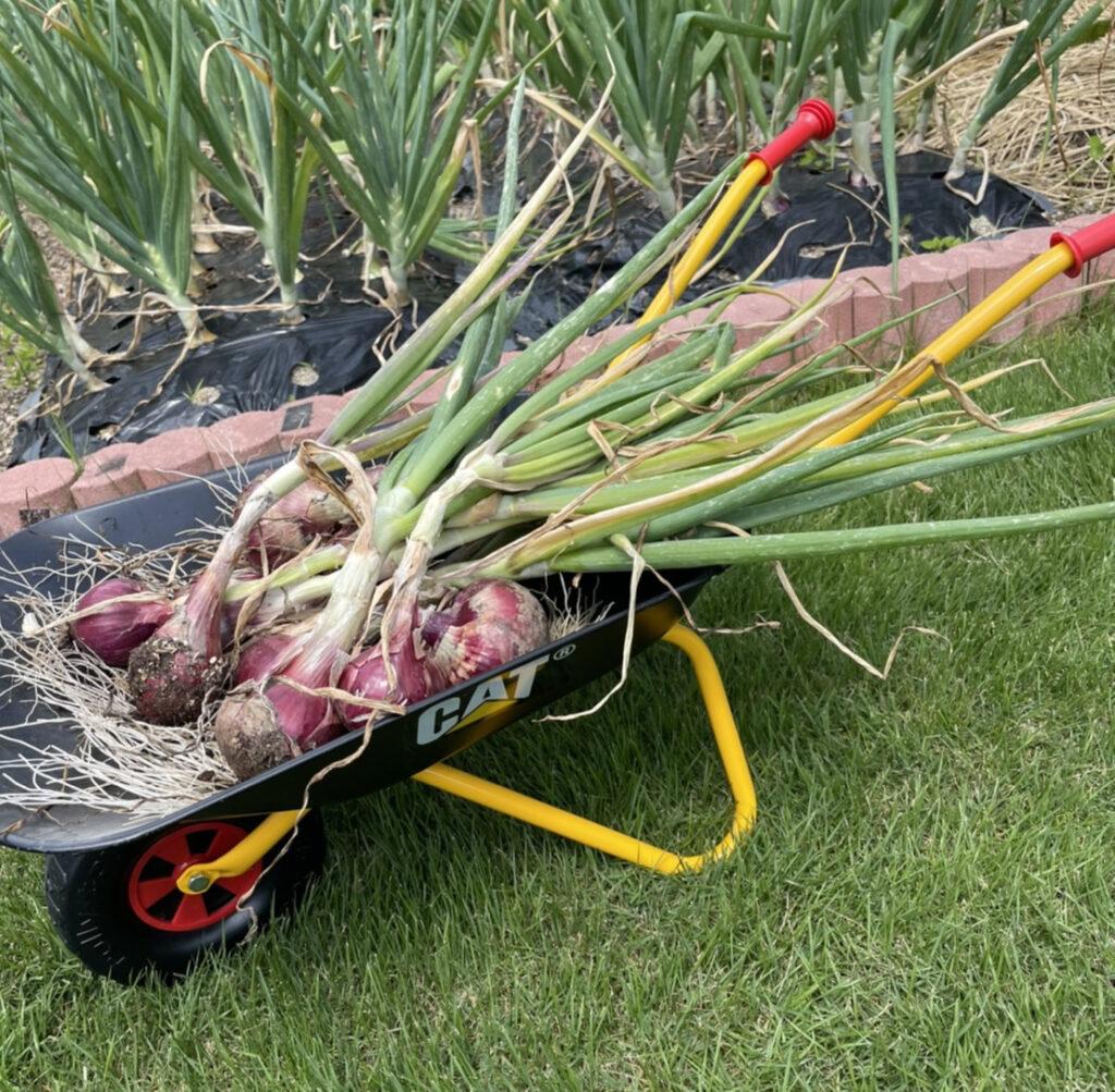 子供用一輪車を家庭菜園で使ってみた