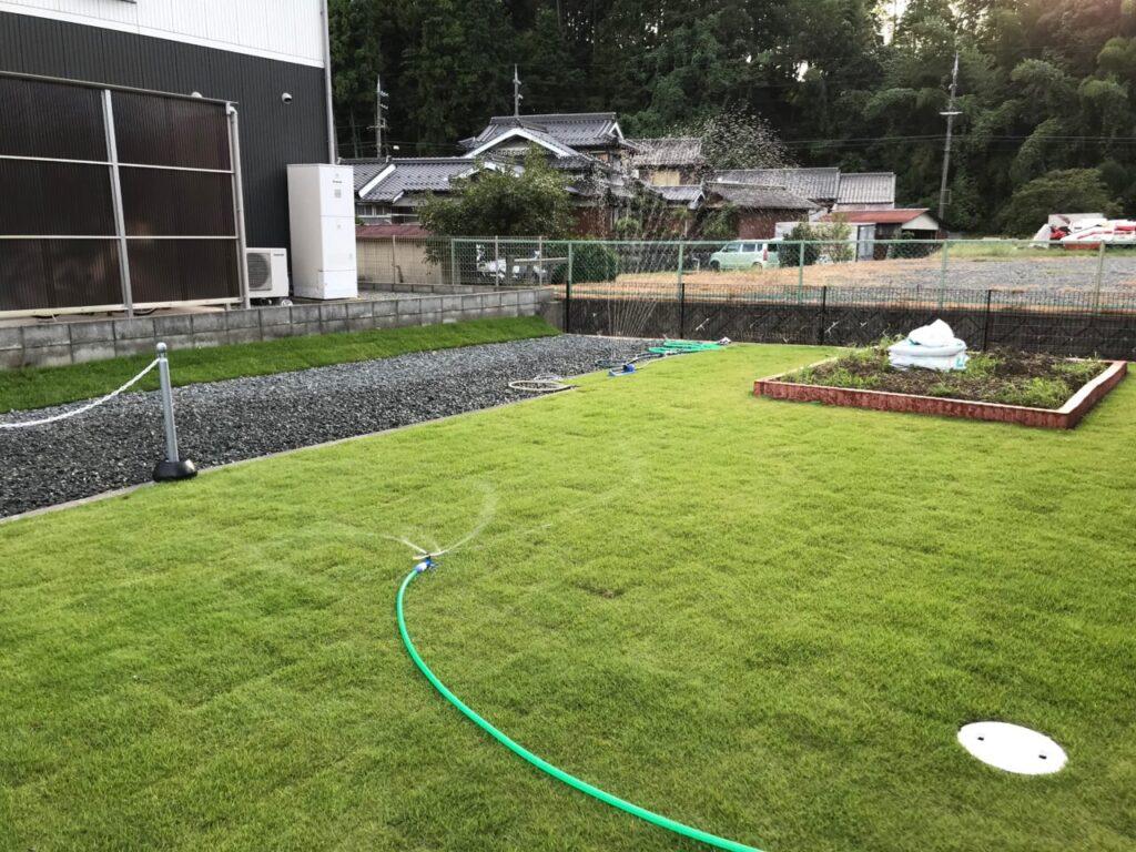 芝生が根付きました
