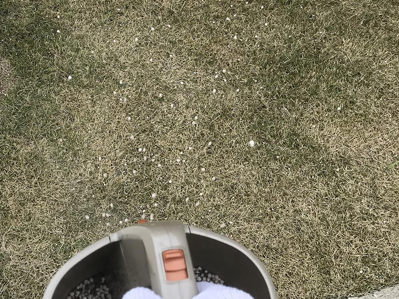 スプレッダーで肥料を散布