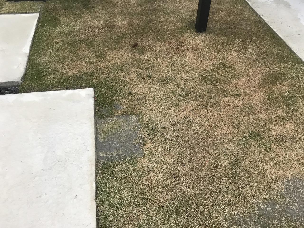 芝生の張り替え完了
