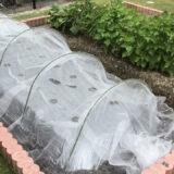 アブラムシを無農薬で退治するには防虫ネット!初心者でも簡単に野菜の害虫駆除できる簡単防虫ネットの口コミ&レビュー