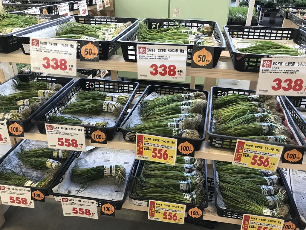 ホームセンターで玉ねぎの苗を購入