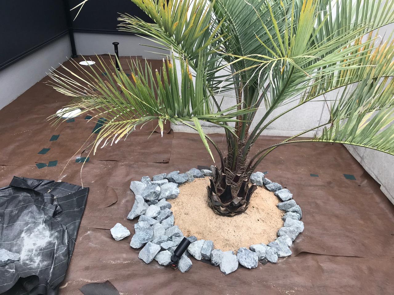 グリ石をヤシの木(ココスヤシ)の周りに敷き詰めていきます