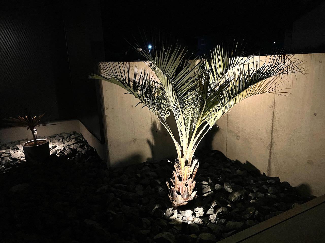 ヤシの木(ココスヤシ)をライティングしてみた