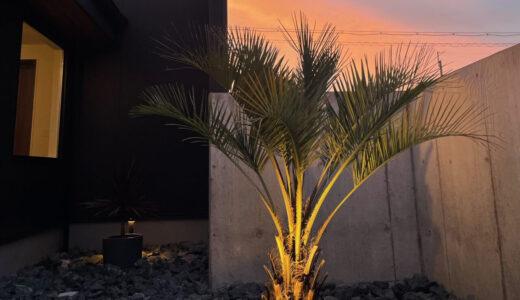 ヤシの木(ココスヤシ)の育て方!初心者でも簡単ロックガーデンの地植え・手入れ・越冬・剪定する方法を解説