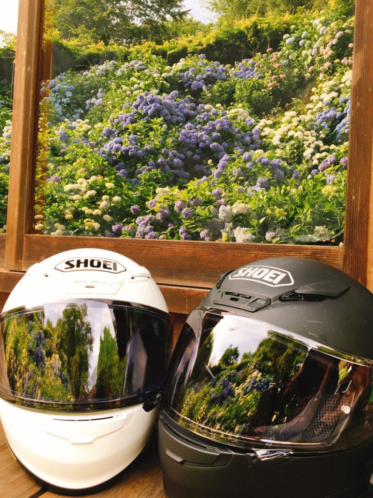 アジサイとショウエイヘルメット