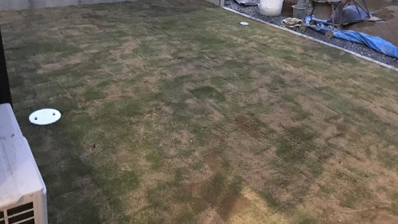 芝を植えたばかりの頃