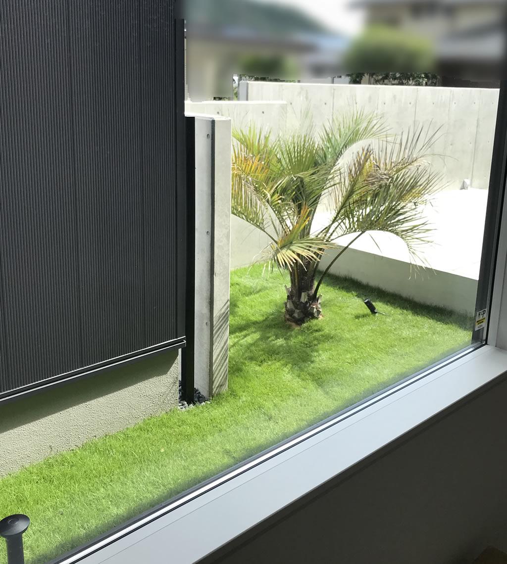 玄関のFIX窓からみるヤシの木