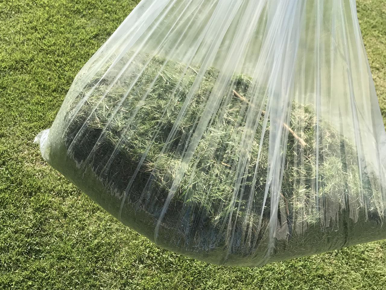 芝刈りの成果