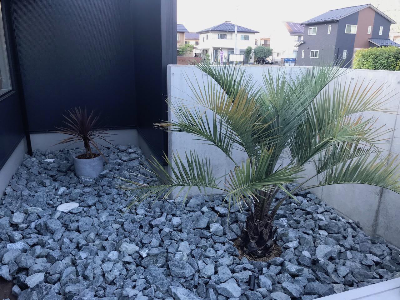ヤシの木(ココスヤシ)のドライガーデンが完成